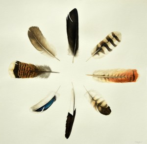 Medicine Feathers for Wild Earth copy