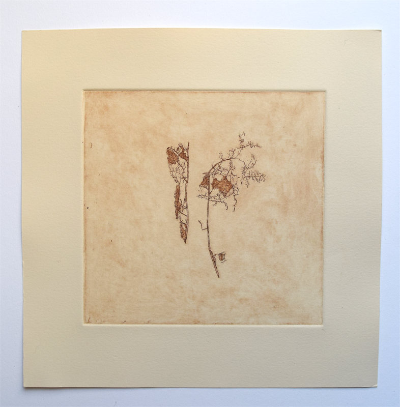 """Leaf Skeletons, 10"""" x 10"""", etching, edition of 4, $65.00"""
