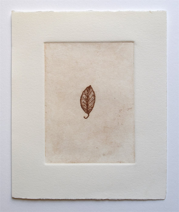 """Tiny Leaf, 5"""" x 6"""", etching, edition of 8, $35.00"""