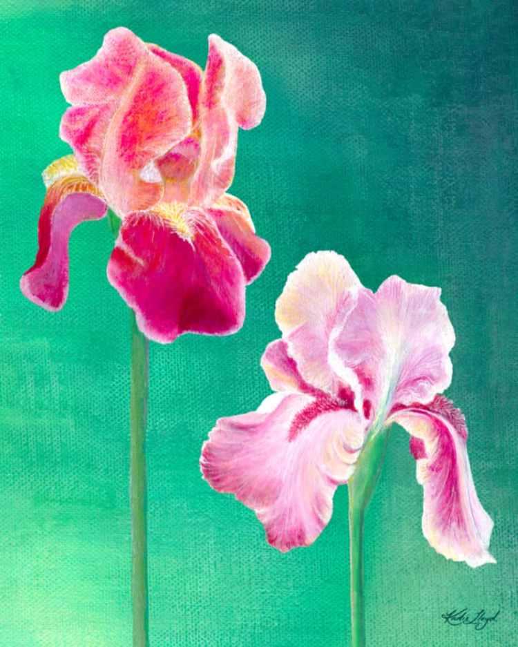 Pink Bearded Iris flowers acrylic painting