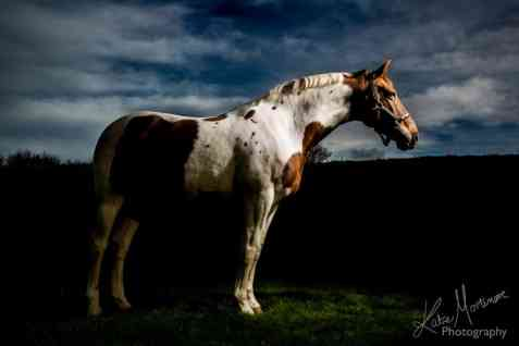 equine portrait photographer hampshire wiltshire