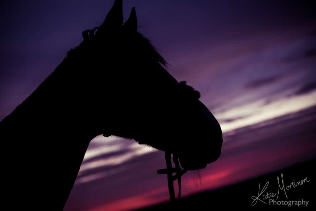 equine portrait sunset wiltshire hampshire salisbury plain photography photographer