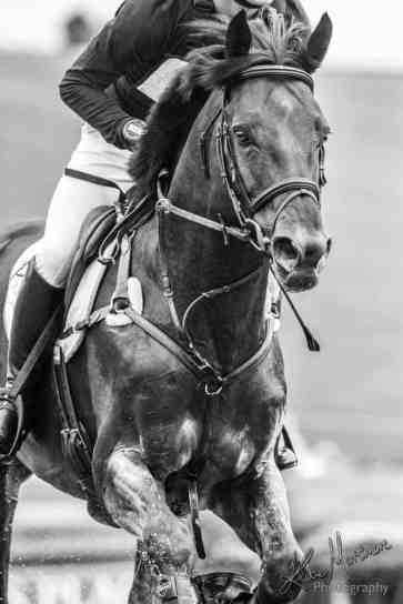 equine equestrian eventing barbury wiltshire photographer