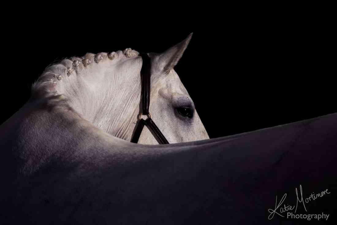equine photographer wiltshire hampshire somerset black background studio lit