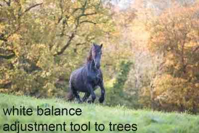 white balance adjustment