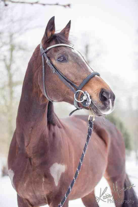 horse snow portrait photoshop
