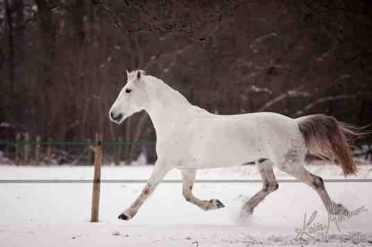 Before photoshop horse snow
