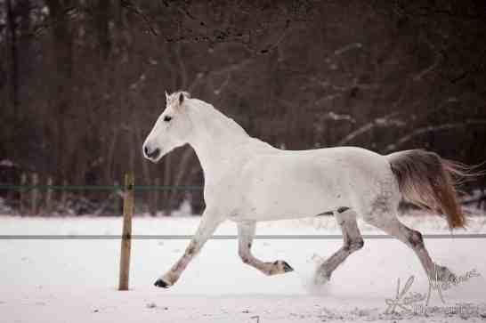 Before photoshop horse snow