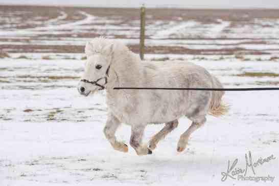 shetland snow play photoshop