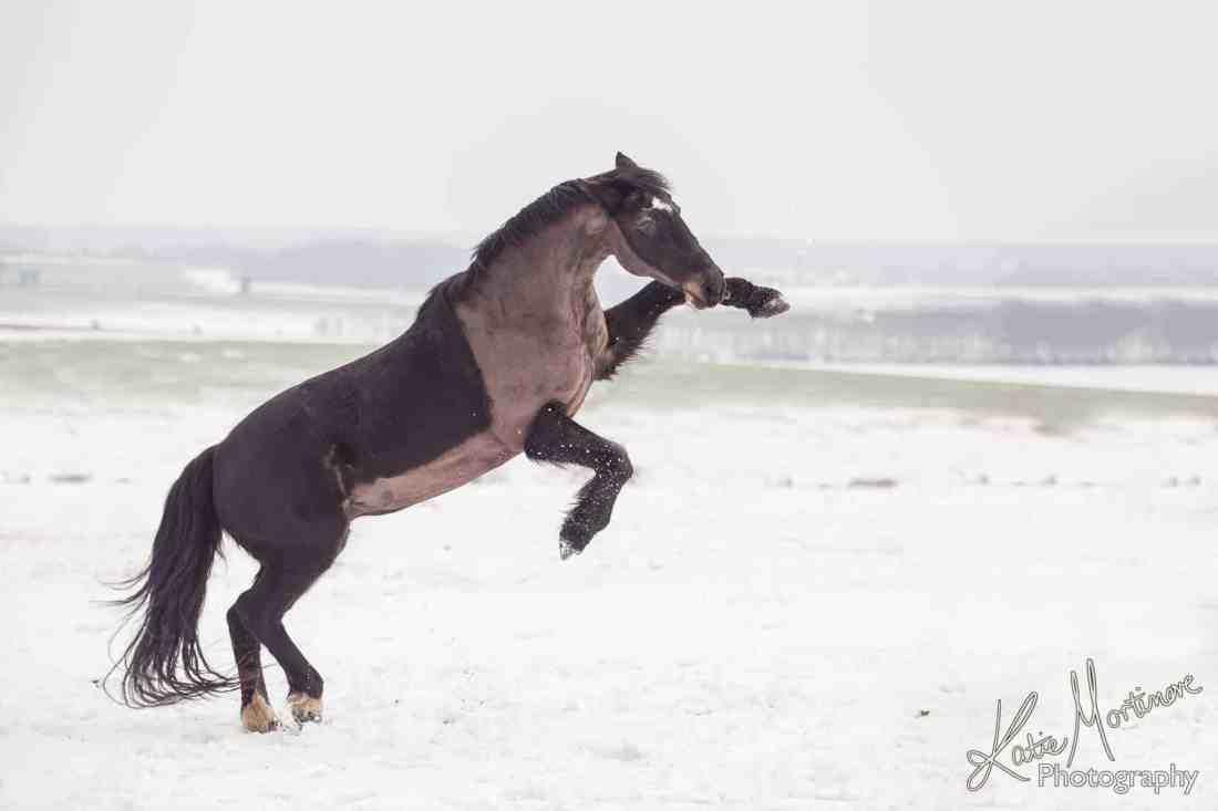 photoshop horse snow rear