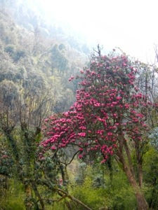 I like the rhododendrons.
