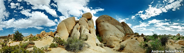 Why I Love Joshua Tree National Park: Panorama