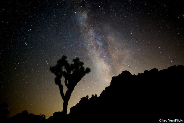 Why I Love Joshua Tree National Park: Milky Way Joshua Tree