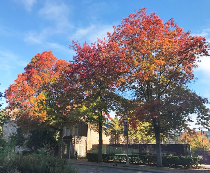 Five Faves 10-12-18: Fall Colors