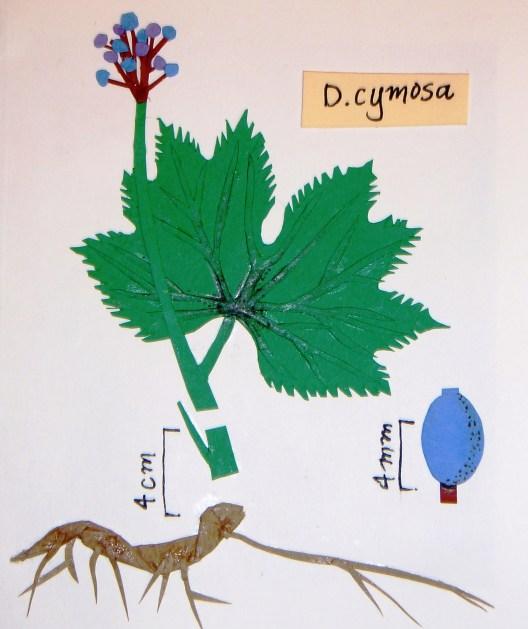 Umbrella Leaf Plant