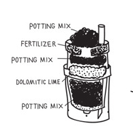 A diagram of two buckets stacked together and layered with potting soil, lime and fertilizer