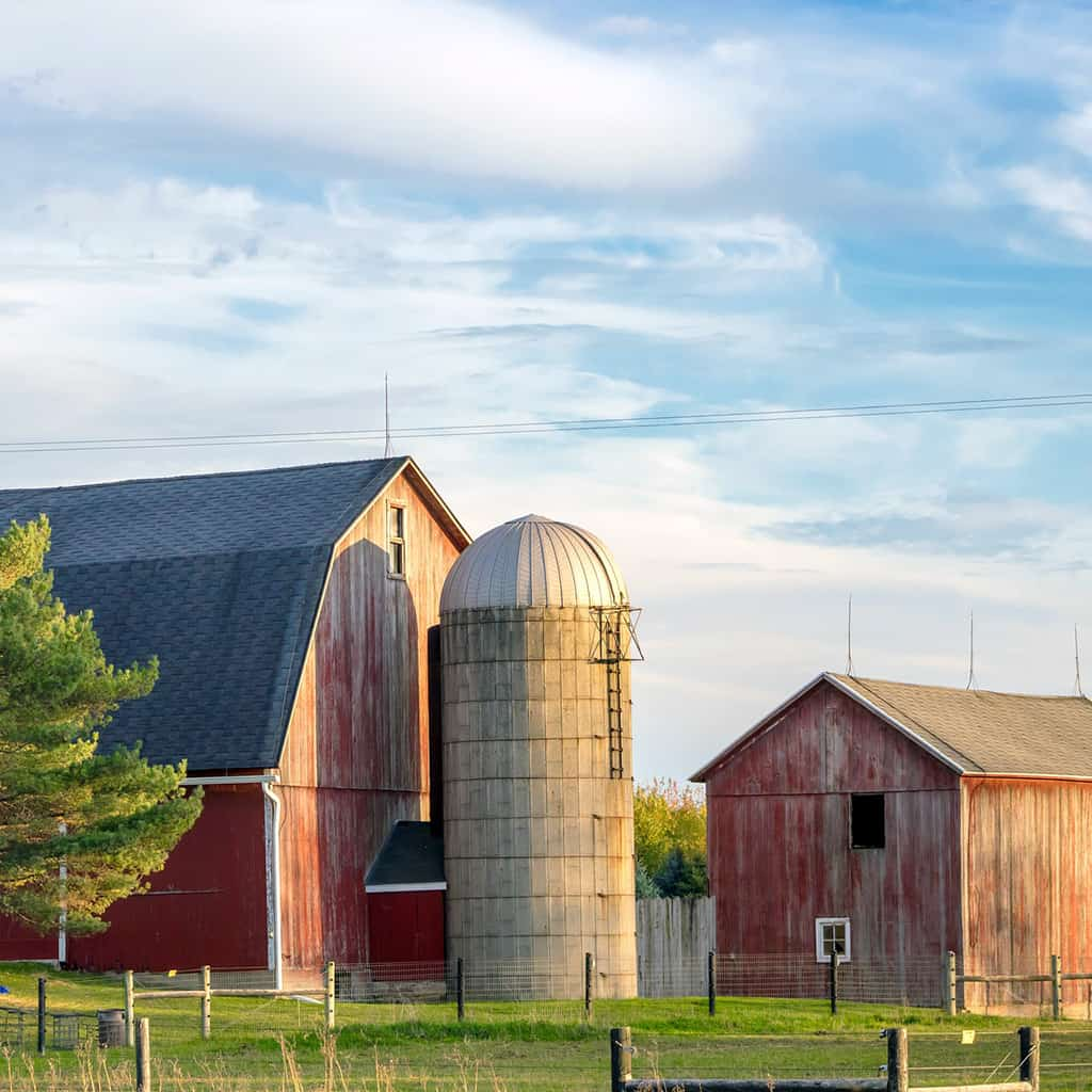 Helping You Find Information, Animal, Barns, and Farming