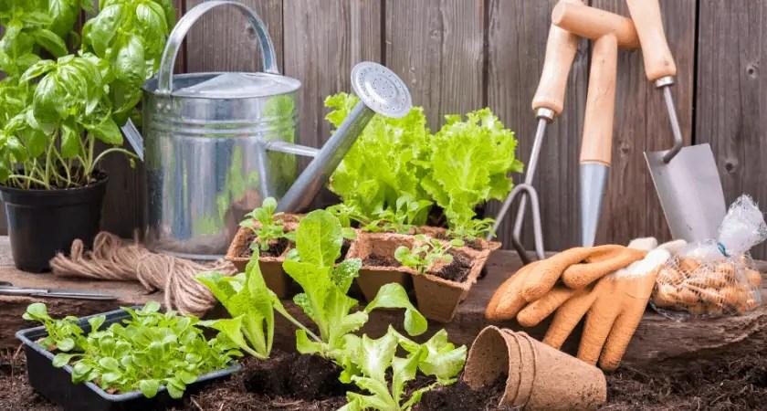 3 Reasons You Need A Garden | Garden Tools