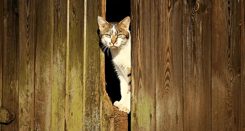 Barn Cats are Needed for Farmhouse Living