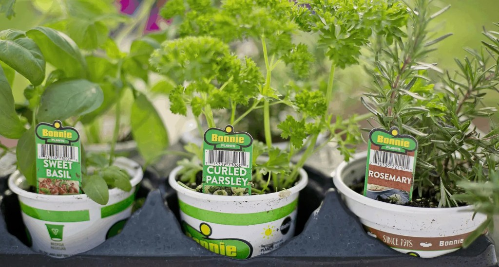 herbs to plant in your herb garden container