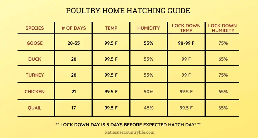 Hatch Eggs at Home Chart