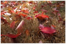 A lovely carpet of Autumn leaves. I was having a go at using a wide angle instead of a tight focus here.