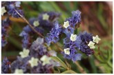 I love teeny tiny flowers. Extra points go to this one for featuring two colours in one go.