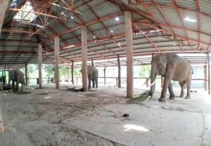 ปางช้างมหาสารคาม