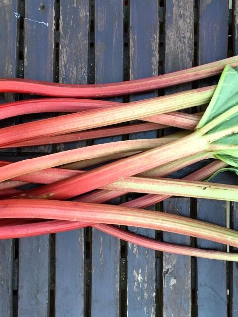 Frische rote Rhabarberstangen vom Küchendachgarten.
