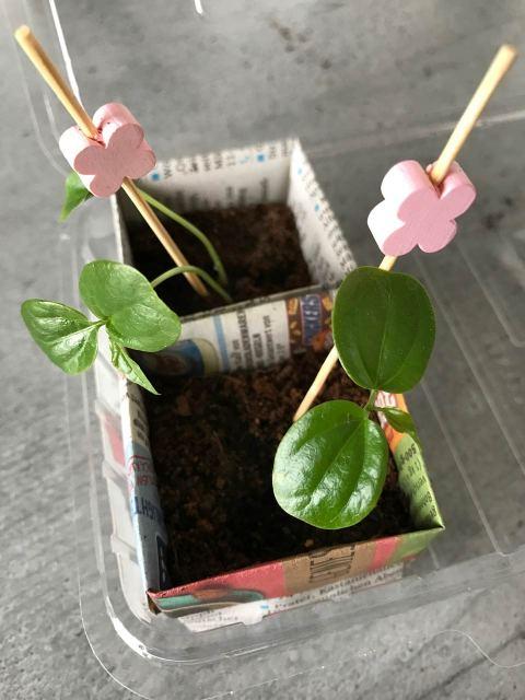 Origami für kleine Pflanztöpfchen - die Sämlinge nach dem Umpflanzen gut feucht halten.