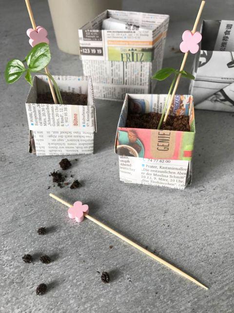Origami für kleine Pflanztöpfchen - die Sämlinge erhalten nach dem Umpflanzen eine kleine Rankhilfe.