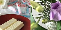 """Die Themen für die erste Woche meiner Serie """"Sakura is coming"""" rund um die Kirschblüte auf www.katjakocht.com"""