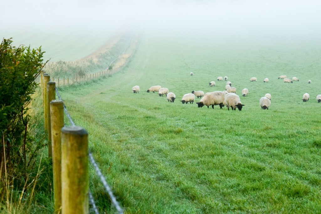 Misty October sussex photographer