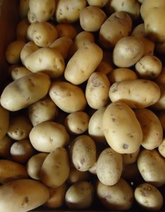 Hillview_Farms_white_potatoes