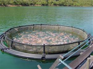 salmon_farm