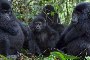 Bwindi Primate Safari