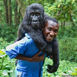 Congo Virunga National Park