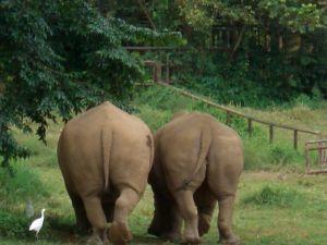 Ziwa Rhino Sanctuary ziwa rhino sanctuary - ziwa rhino tracking by katona tours 300x225 - Rhino Tracking in Ziwa Rhino Sanctuary