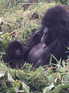Double Gorilla Tracking Rwanda