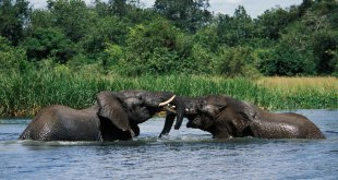 2 Days Murchison Falls Tour 2 Days Murchison Falls Tour - Murchison falls tour by katona tour - 2 Days Murchison Falls Tour – Ziwa Rhino Tracking