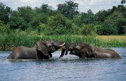 2 Days Murchison Falls Tour - Ziwa Rhino Tracking
