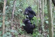Cheap Uganda Tours and Budget Uganda Safaris packages