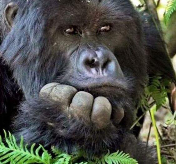 Best Gorilla Tours