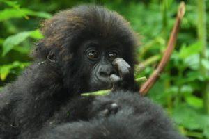 Kwita Izina Rwanda