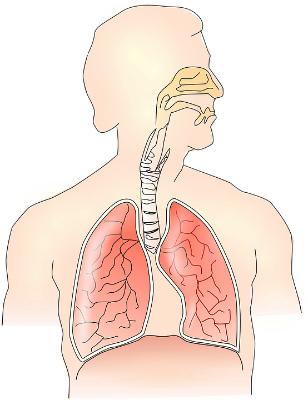 腹式呼吸 胸式呼吸 カトウ治療院 整体院 姿勢