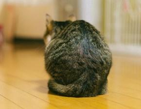 呼吸 腹式呼吸 猫背 横隔膜 カトウ治療院 整体院 一宮 稲沢