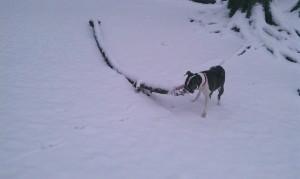 Big Snow Stick