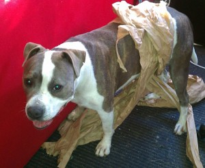 Bella in a plain brown wrapper