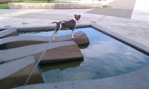 Bella at the Water Feature