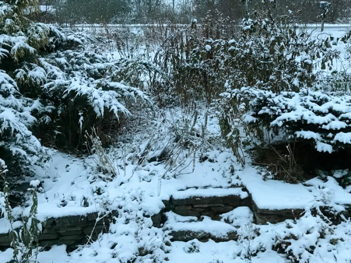 First snow on my overgrown garden. katrinaallenart.com